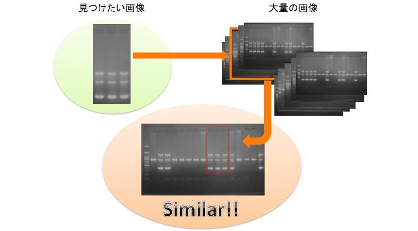 東大発ベンチャーLPixel、ライフサイエンス研究に特化した論文画像不正対策のための類似画像検出システムを開発