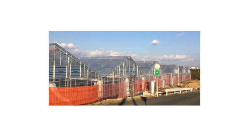 富士通・オリックス・増田採種場、静岡県磐田市でのスマートアグリカルチャー事業の開始