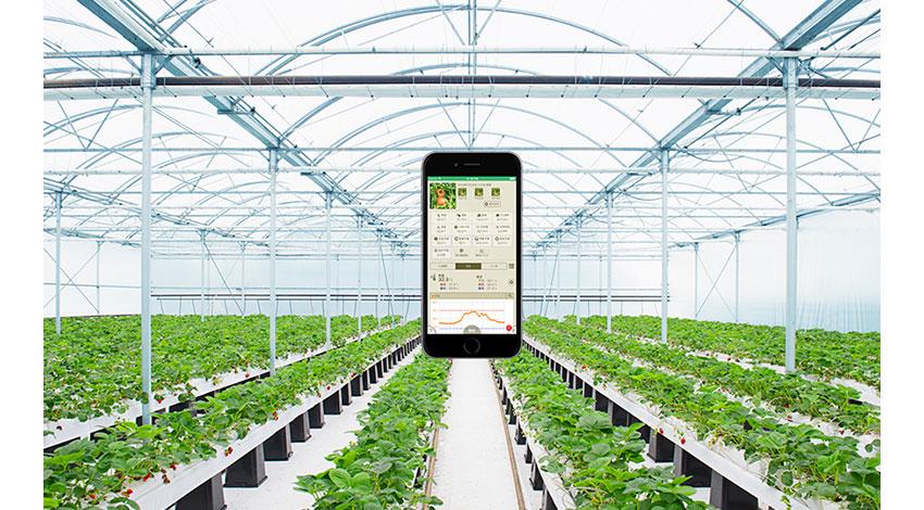 セラク、タキイ種苗と農業IoTサービス「みどりクラウド」の 販売代理店契約を締結