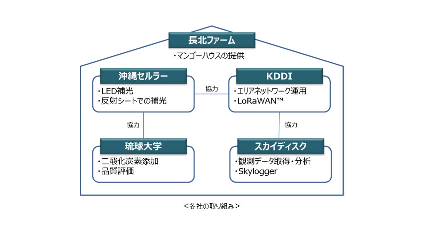 KDDIなど4社、IoT・LoRaWANを活用したマンゴー栽培の実証実験開始