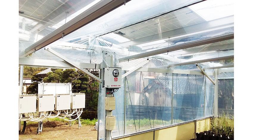 MOVIMASとスマートブルー、ソーラーシェアリング対応IoTソリューション「MOVIMAS AGR」による 高単価作物栽培の実証事業を開始