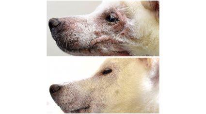 ALBERT、VDT社と人工知能・ディープラーニング技術を活用し獣医療における皮膚病自動判定に関する実証実験を実施