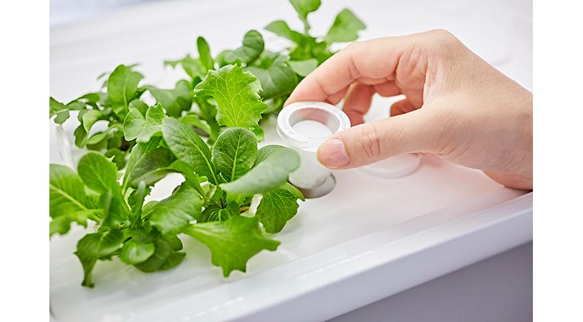 アドトロンテクノロジー、IoT水耕栽培機「foop」に使用可能なカプセル型種子キット「foop capsule」を発売
