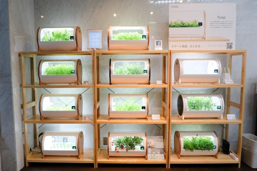 家で野菜を育てるIoT水耕栽培機「foop(フープ)」 ーアドトロンテクノロジー インタビュー