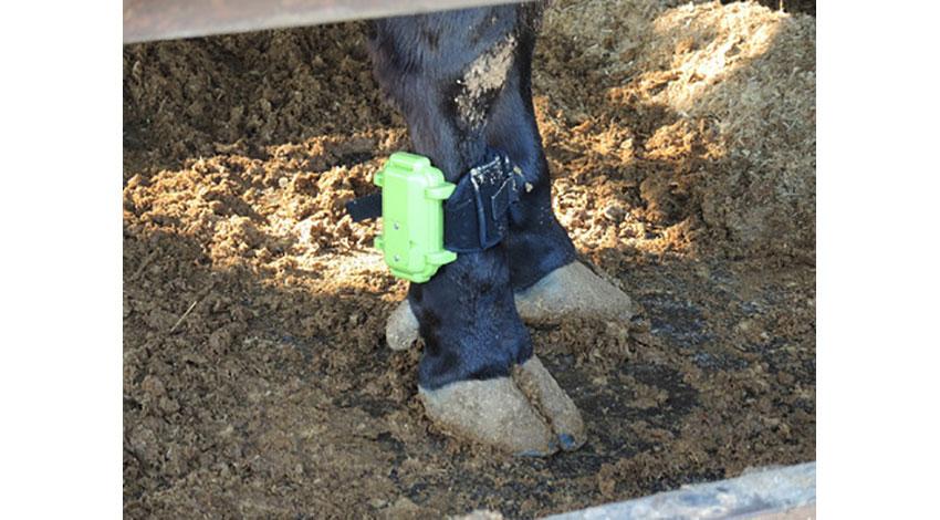 バイオシグナルが医師と技術者のコラボで実現、食用牛の転倒をセンサーでリアルタイム検知