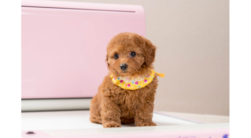 愛犬の排せつをセンサーで感知、ジャパンファーストステップが室内用全自動トイレ「わんわんマイスター」をリリース