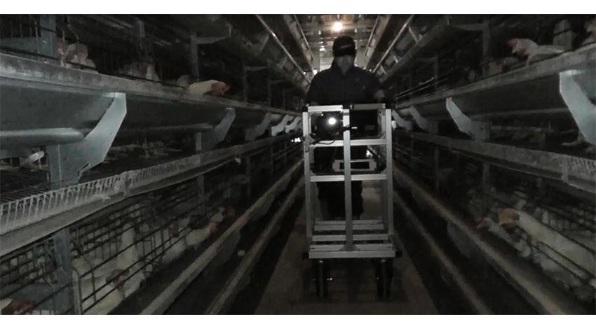マルイ農協とNEC、AIを活用した斃死鶏発見システムを共同開発