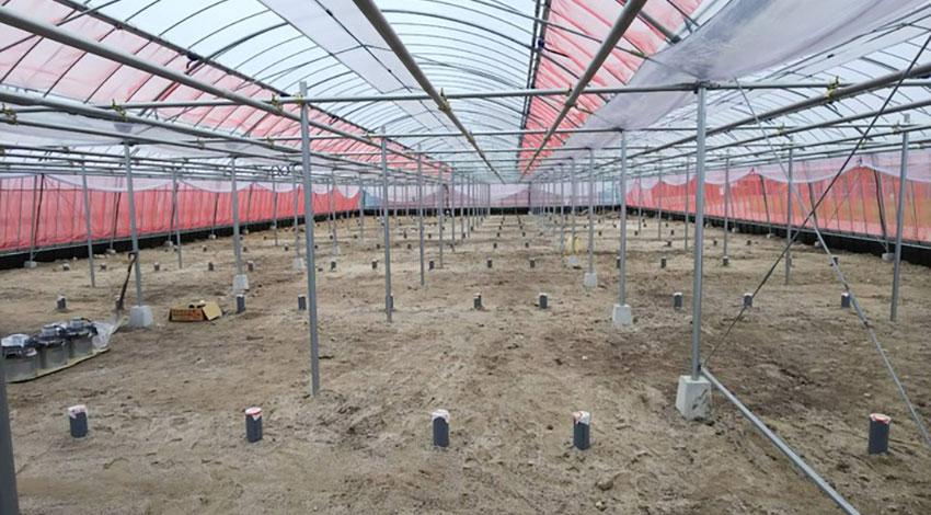農業ベンチャーのグリーンリバーホールディングス、IoTを利用した関連特許5件を取得