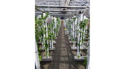 バジル生産にIoTを活用、グリーンリバーホールディングスが「スマートファーム」の稼働を開始