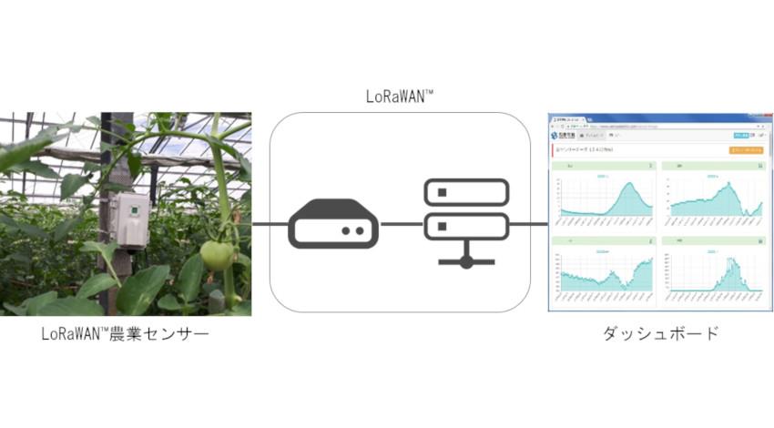 西菱電機、LoRaWAN活用のスマート農業でトマト栽培環境を数値化、収益改善を実現