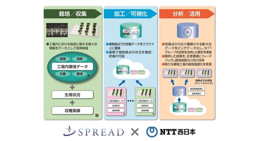 スプレッドとNTT西日本、IoTとAIを活用した「人工光型植物工場」の共同実験を開始