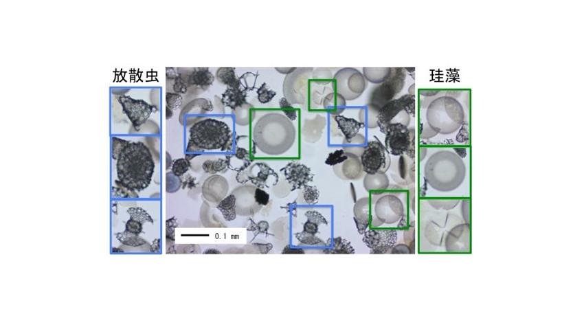 産総研・NEC等、AI活用した微化石の鑑定・分取技術を開発