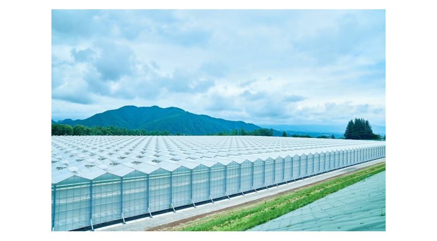 NTTとサラダボウル、農業×AI/IoTによる「次世代施設園芸のトータルソリューション」確立に向けて協業