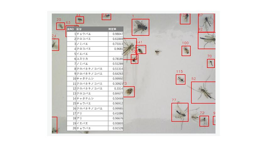 イカリ消毒、YE DIGITALのAI画像判定サービス活用で虫の分類識別を自動化