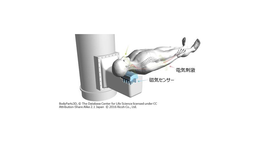 リコー・東京医科歯科大学・金沢工業大学、身体を傷つけずに神経活動を可視化する脊髄磁界計測システムを用いた腰部などの生体磁界計測に成功