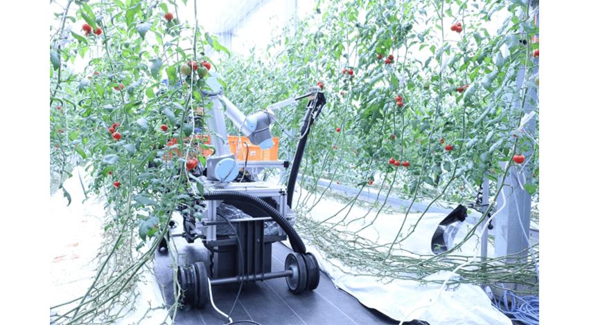 スマートロボティクス、AI自動走行型アームロボット「トマト自動収穫ロボット」の実証実験を開始