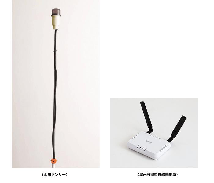 IIJの水田センサー