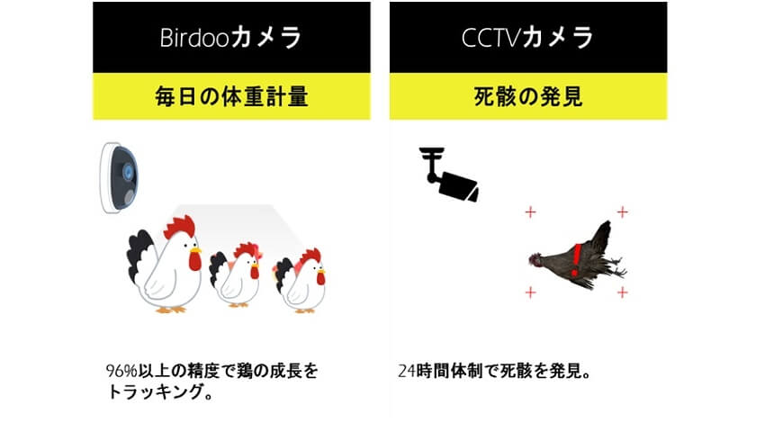 NTT東日本とKNEX、AIによる食肉用鶏の体重自動検知と死鶏検知の開発検証を実施