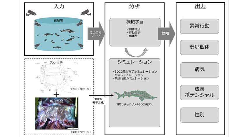 北海道大学とソフトバンク、AI・IoTを活用したチョウザメのスマート養殖共同研究プロジェクトを開始