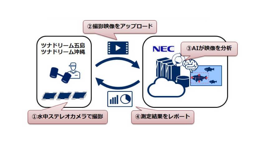 NECと豊田通商、AI・IoT技術によるクロマグロ幼魚のサイズ測定自動化サービスを開発