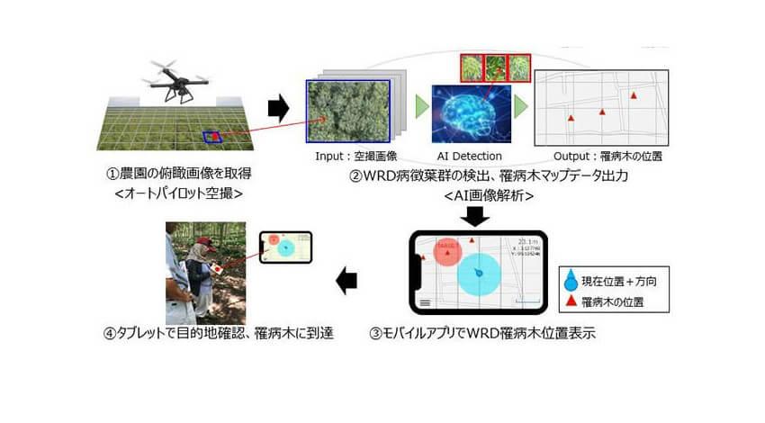 ブリヂストンとISID、AI画像診断を用いたパラゴムノキの病害診断技術を開発