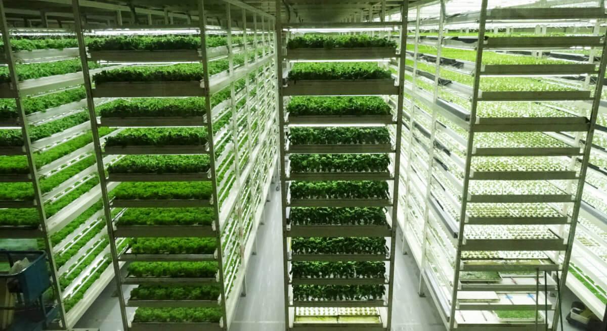 栽培技術の革新とデータで未来の食を守る、MIRAIの植物工場