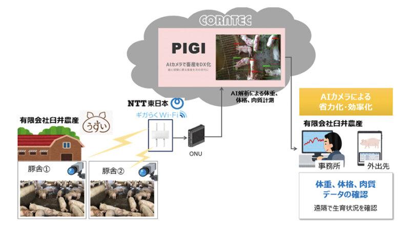コーンテック・NTT東日本・臼井農産、AIカメラを活用した養豚の体重・体格・肉質測定の実証実験を開始