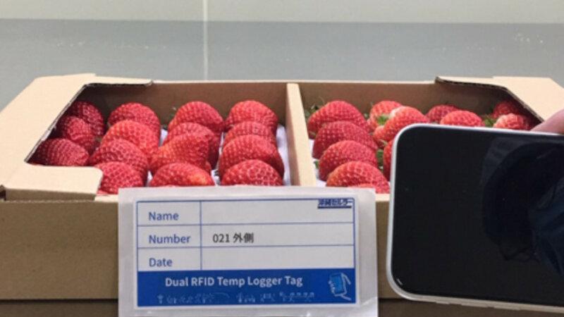 サトー・沖縄セルラー・KDDI総合研究所、RFIDラベルを活用した温度管理システムを植物工場のイチゴで運用開始
