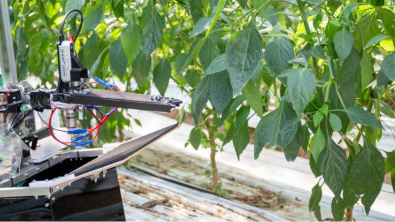 AGRIST、農業用IoTセンサー「MIHARAS」を活用して圃場の生産性の向上と見回り省力化に向けた検証を開始