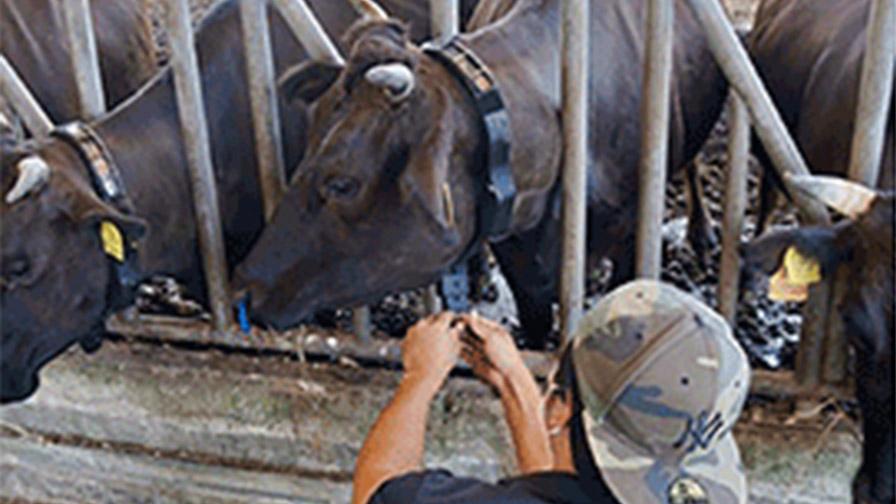 東京工業大学・信州大学・ISID他3社、放牧牛を担保とするABLにおけるAIモニタリングシステム「PETER」の有効性検証を開始