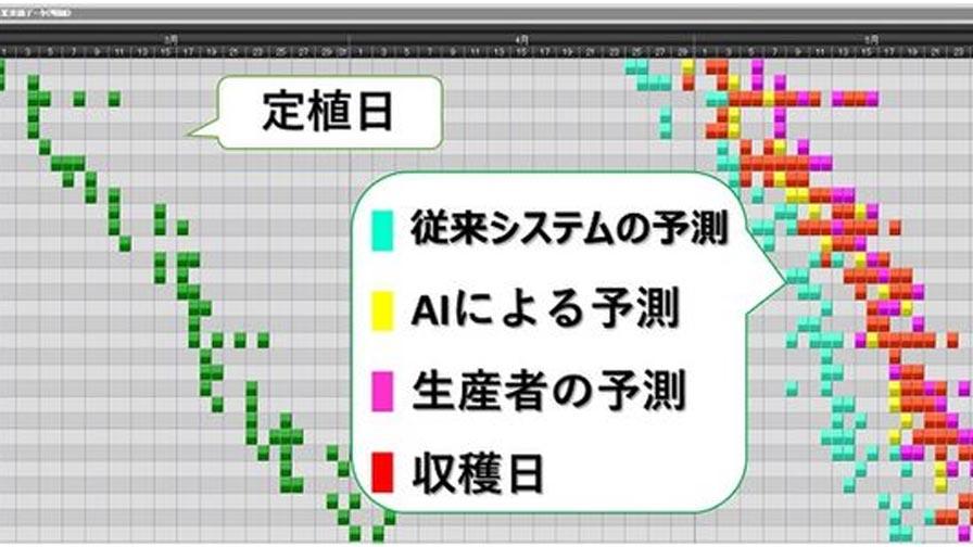 日立ソリューションズ東日本、「AIを活用したレタスの生育予測システム」をトップリバー農場において本格運用開始