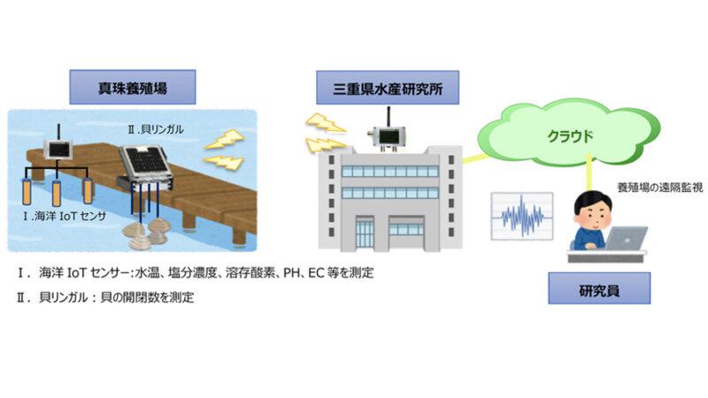 三重県水産研究所・NTTアグリテクノロジー・ミキモト、真珠養殖業の活性化へ向けIoTを活用したプロジェクトを開始